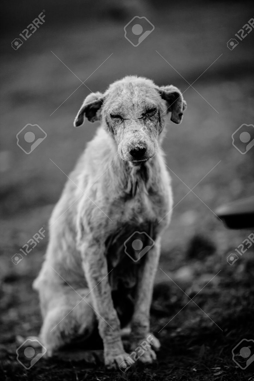 Black and white of an abandoned dog Stock Photo - 18732940