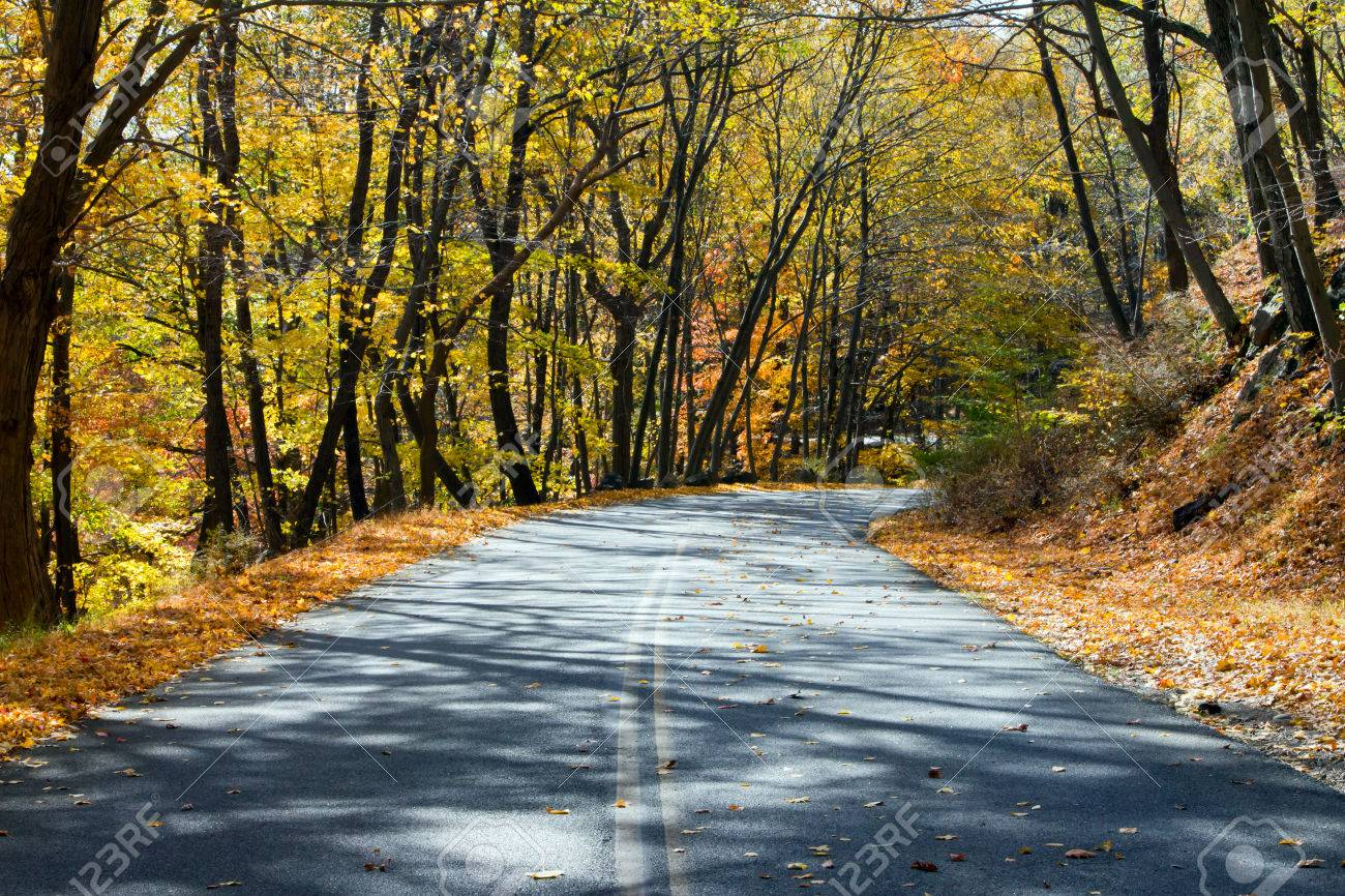 Empty road through a golden fall forest in New York Stock Photo - 23257049
