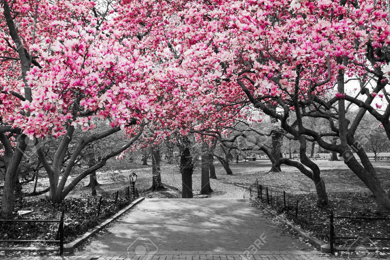 Risultati immagini per foto in bianco e nero