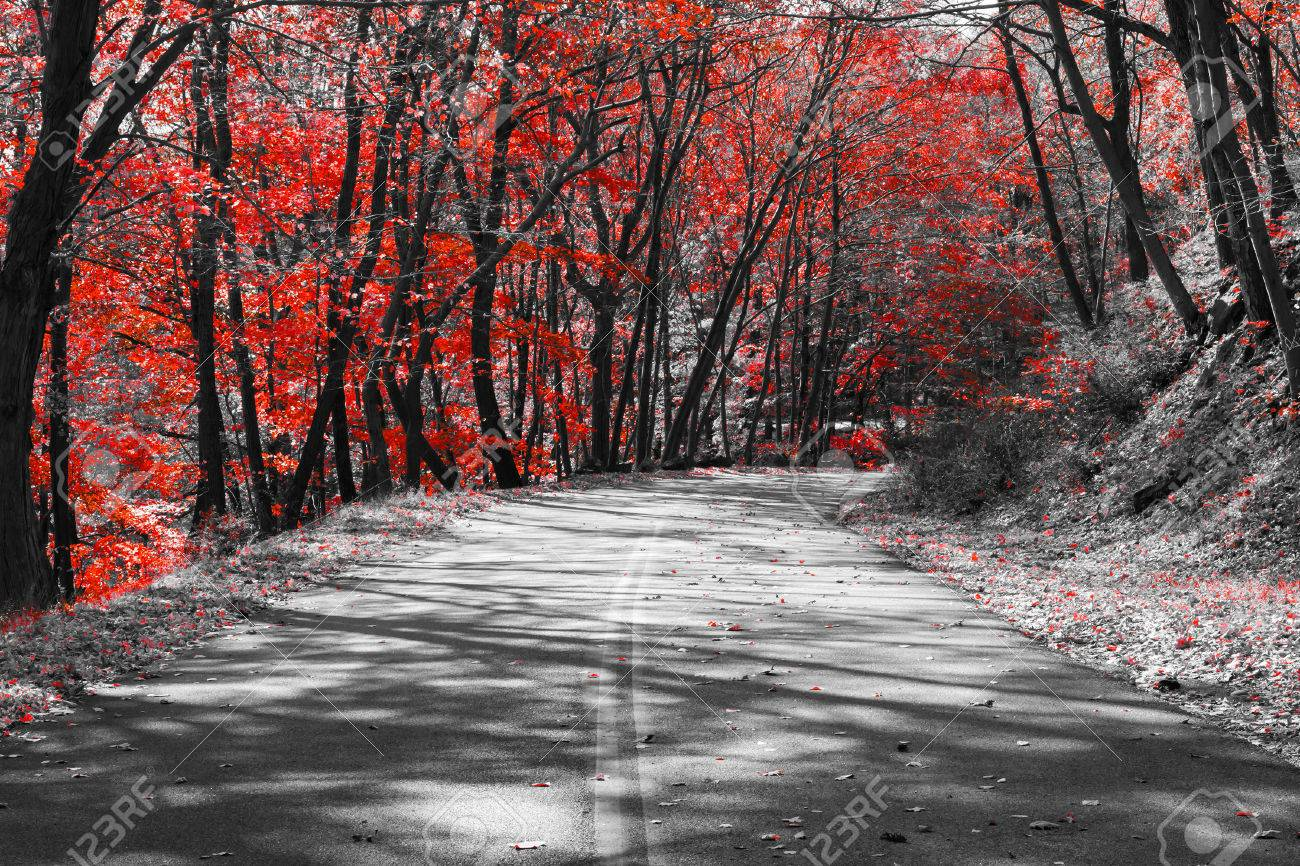 Empty road through a red fall forest in a black and white landscape stock photo