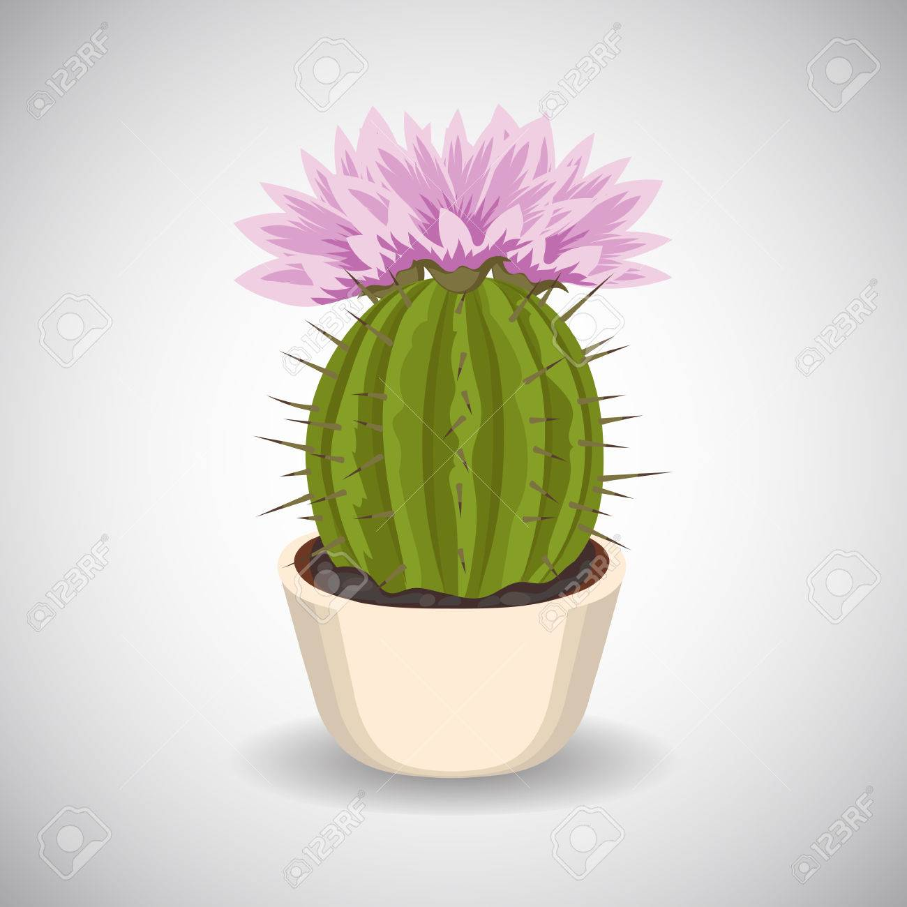 Cactus With Beautiful Pink Flowers In Flower Pot Royalty Free