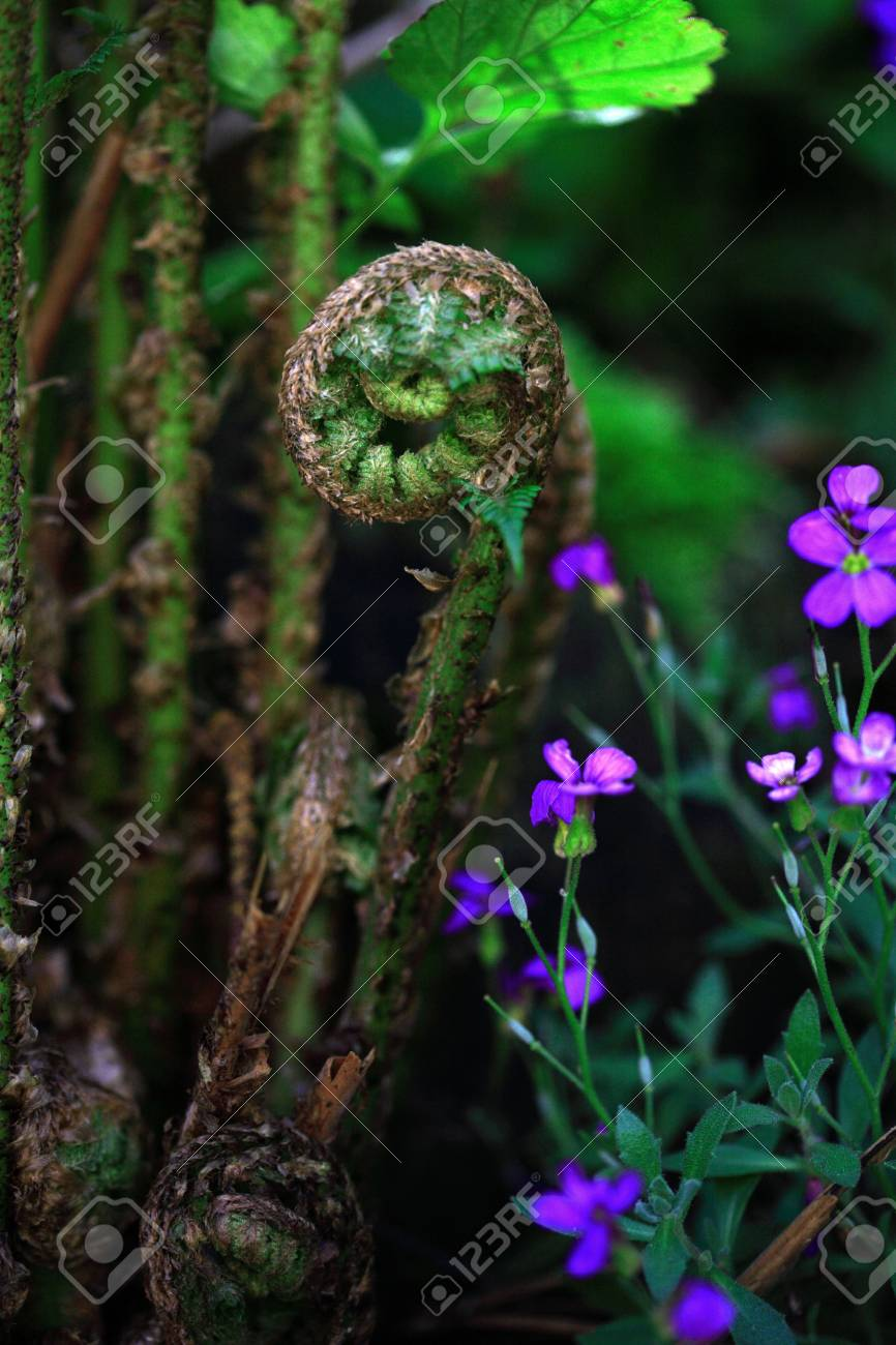 Uncurling Fern and flower - 672437