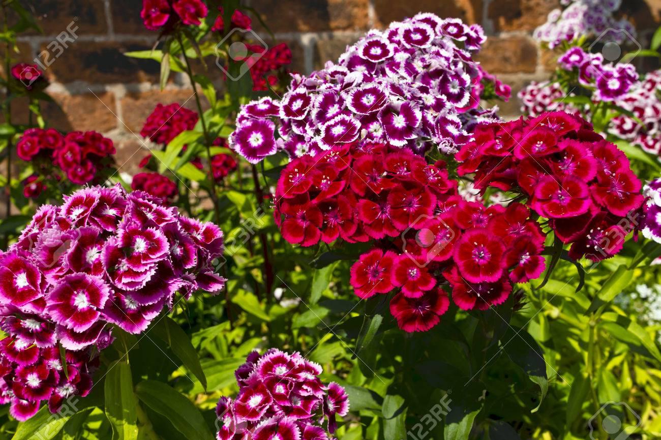 Winterharde bloemen voor tuin