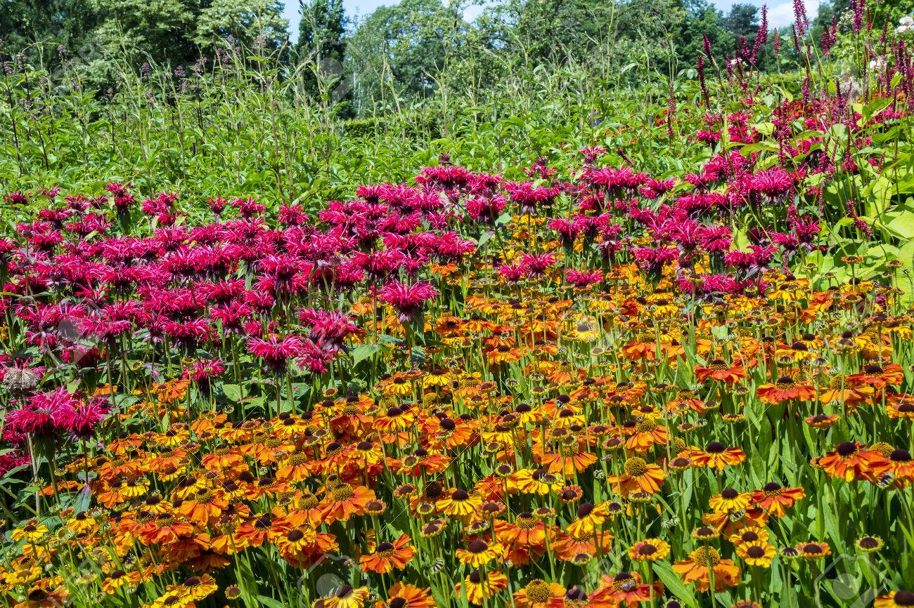Perennial Flowers Pink Monarda And Orange Rudbeckia In A Herbaceous