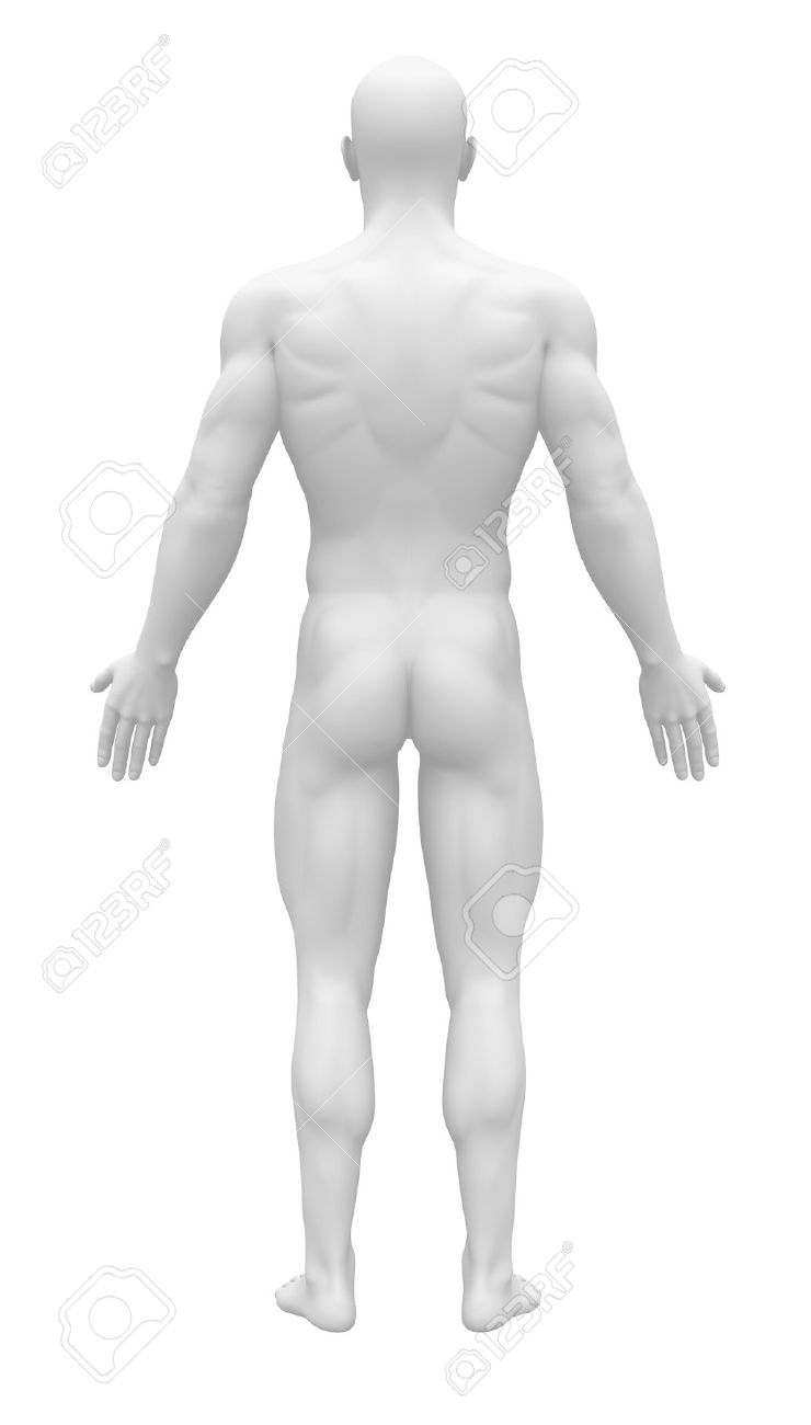 Blank Anatomy Figure Back View Stock Photo Picture And Royalty