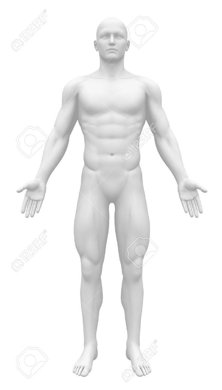 Blank Anatomy Figure - Front View Stock Photo, Picture And Royalty ...