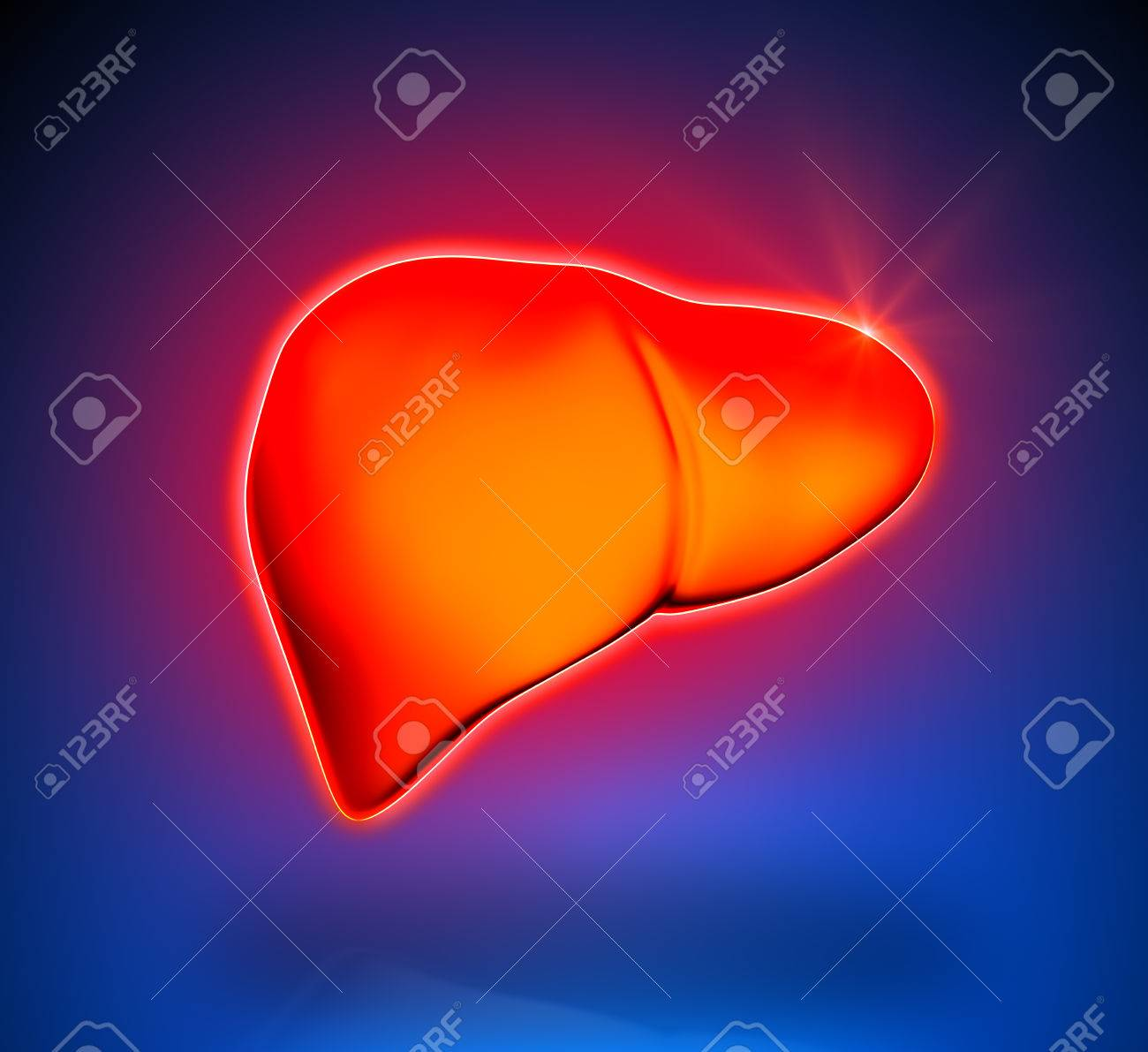 Liver - Internal organs - blue background Stock Photo - 22971492