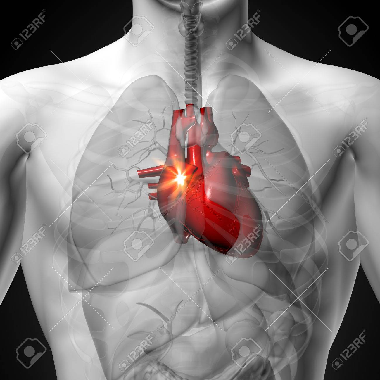 Heart Male Anatomy Of Human Organs X Ray View Stock Photo