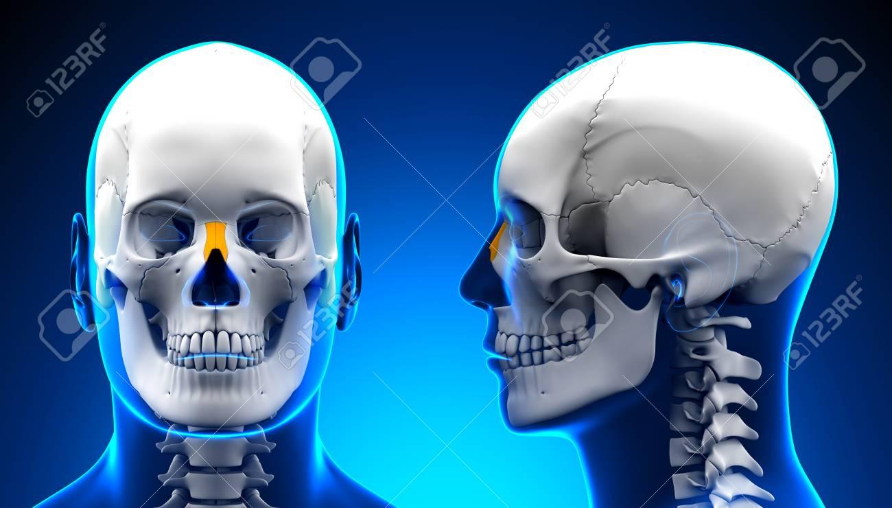 Male Nasal Bone Skull Anatomy - Blue Concept Stock Photo, Picture ...