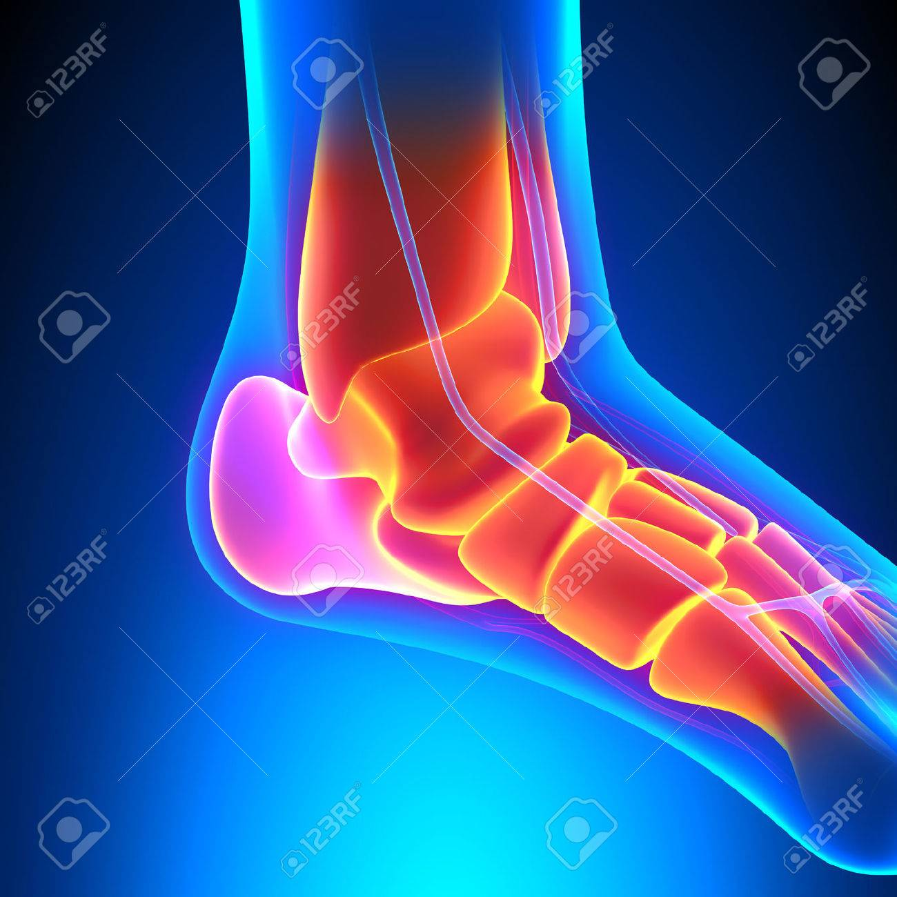 Ankle Bones Anatomy Pain Concept Stock Photo Picture And Royalty