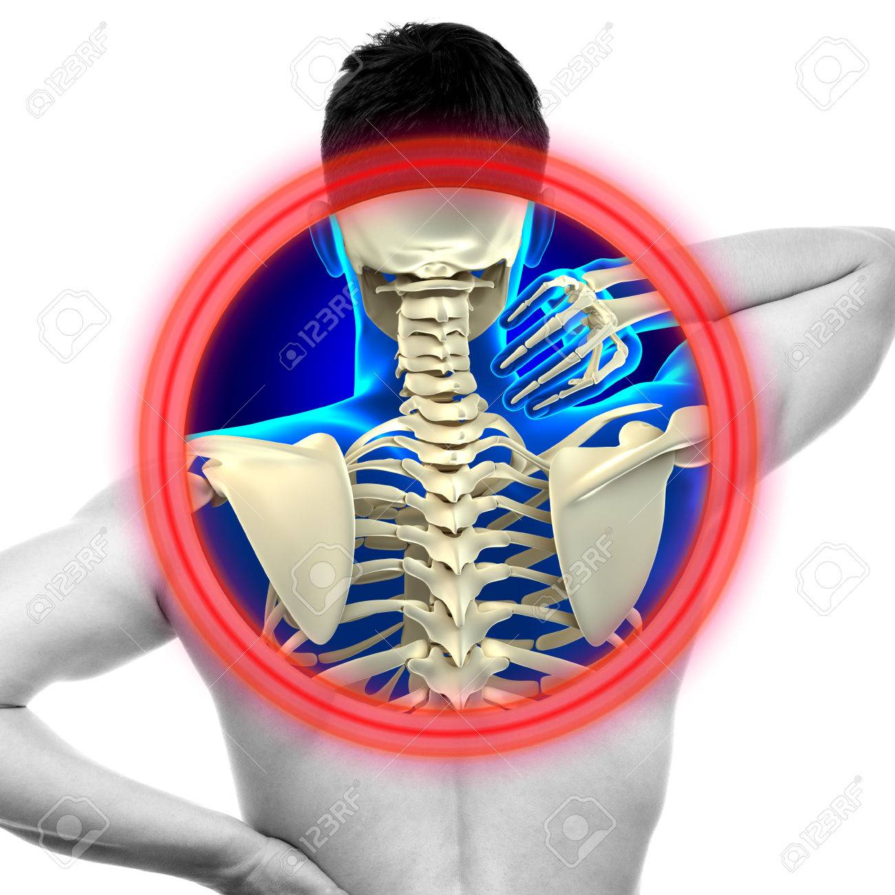Neck Pain Cervical Spine Isolated On White Real Anatomy Concept