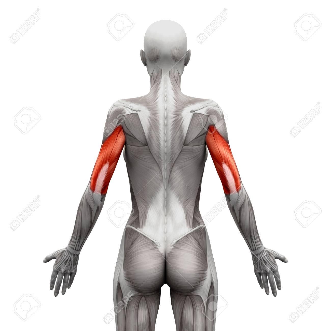 Tolle Weibliche Anatomie Des Menschen Bilder - Anatomie Ideen ...