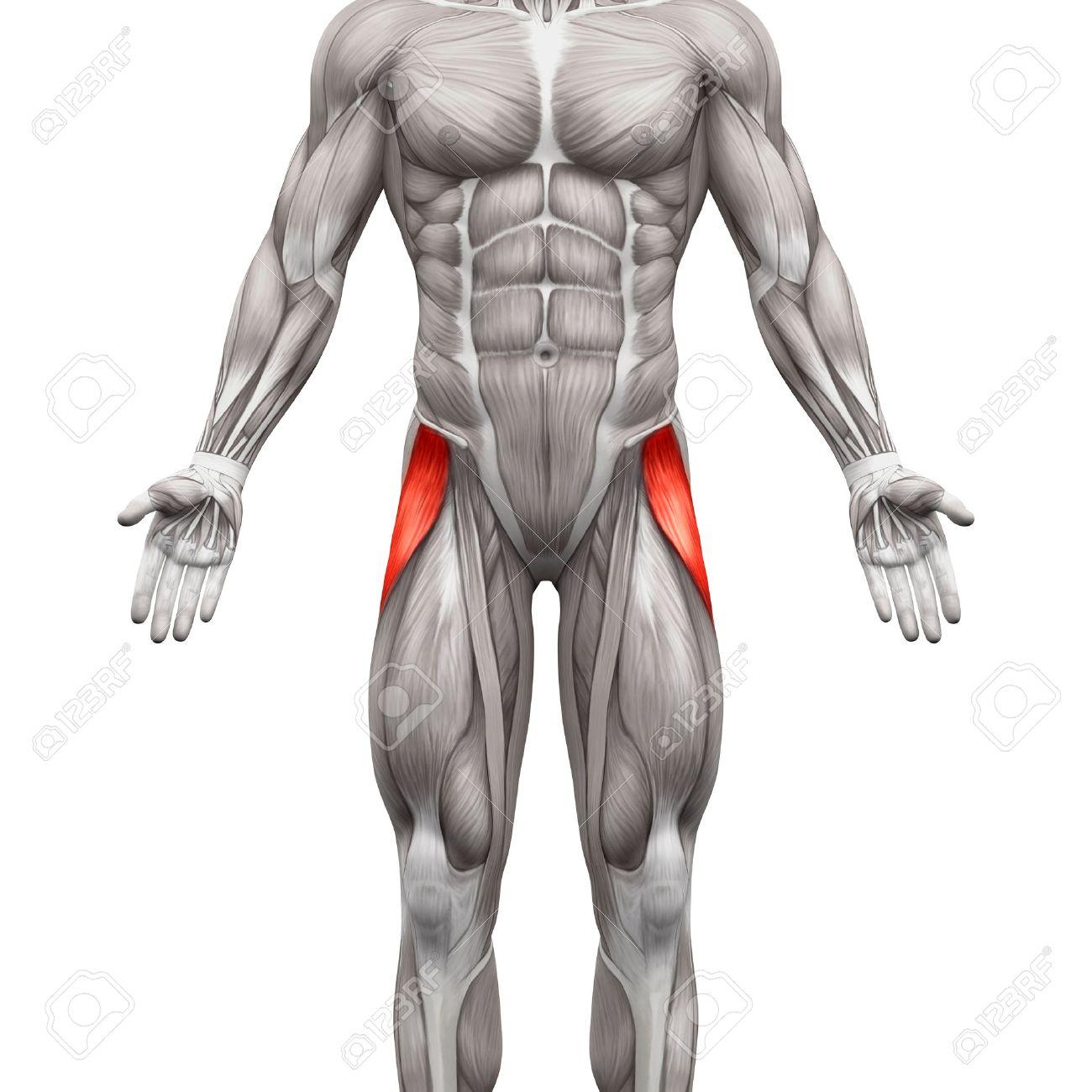 Atemberaubend Wie Man Studiert Anatomie Und Physiologie Effektiv ...