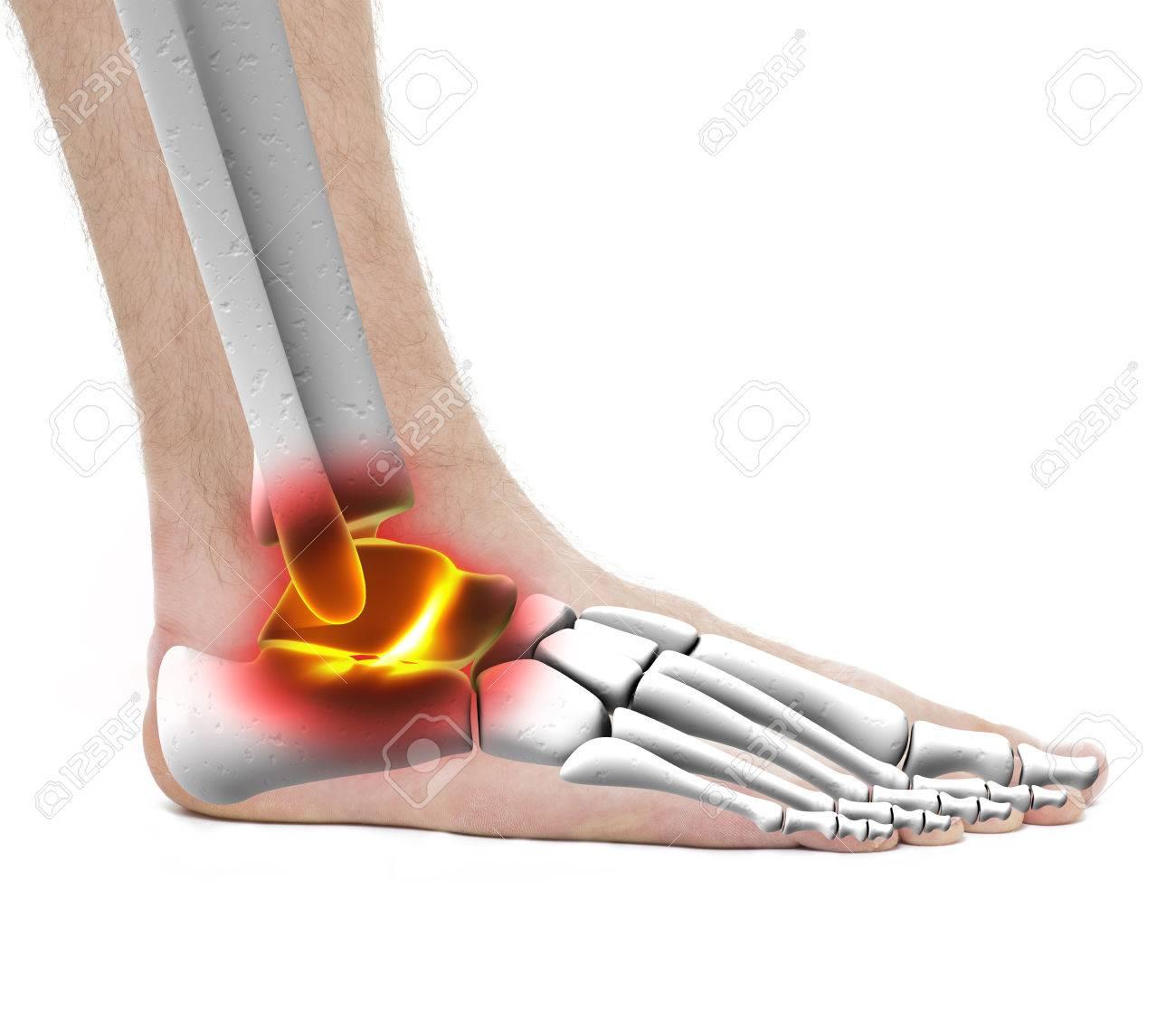 Ankle Pain Injury Anatomy Male Studio Photo Isolated On White