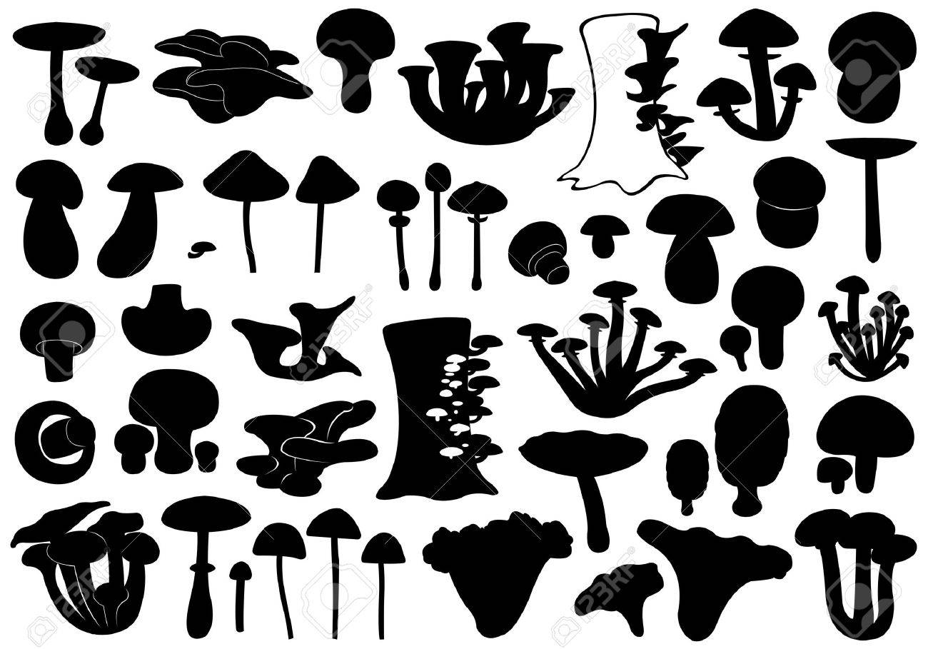 Set of different mushrooms isolated on white - 20295364