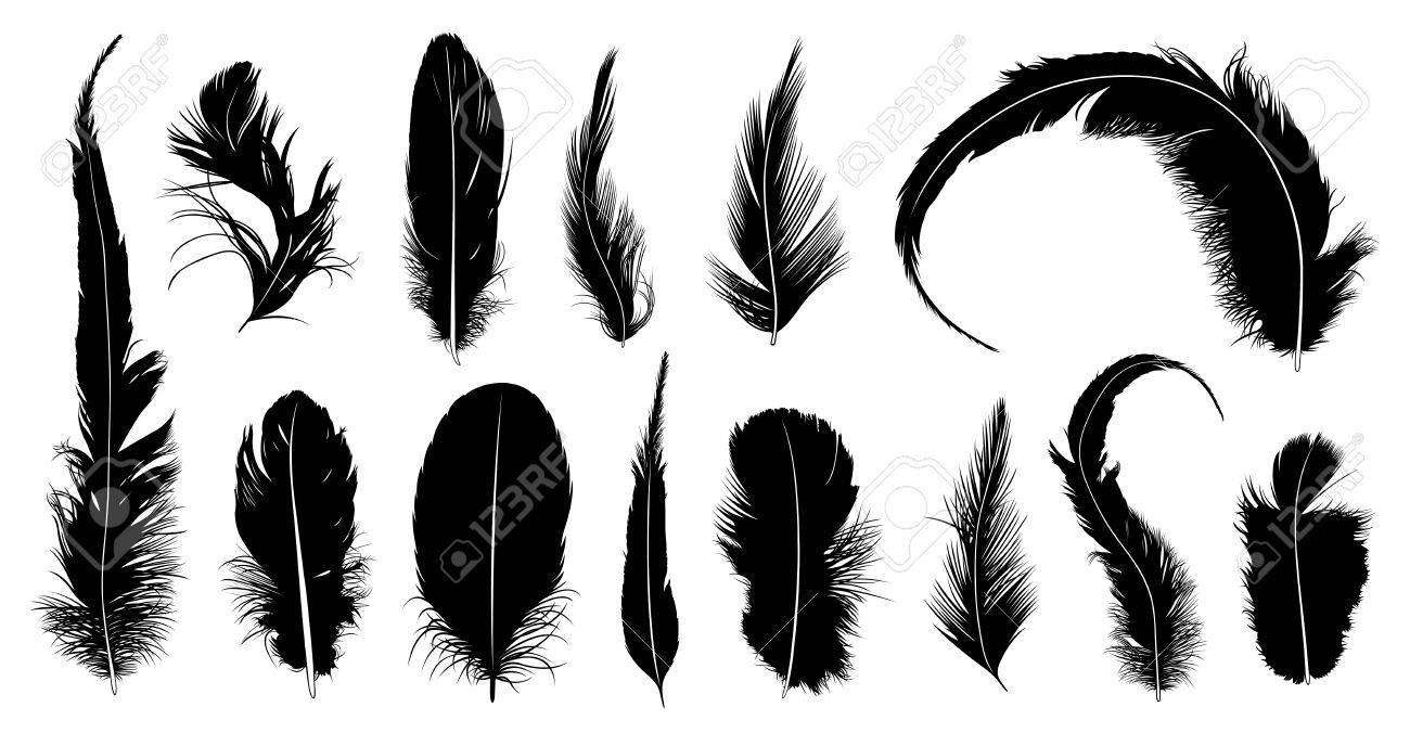 Set of different feathers isolated on white - 35103626