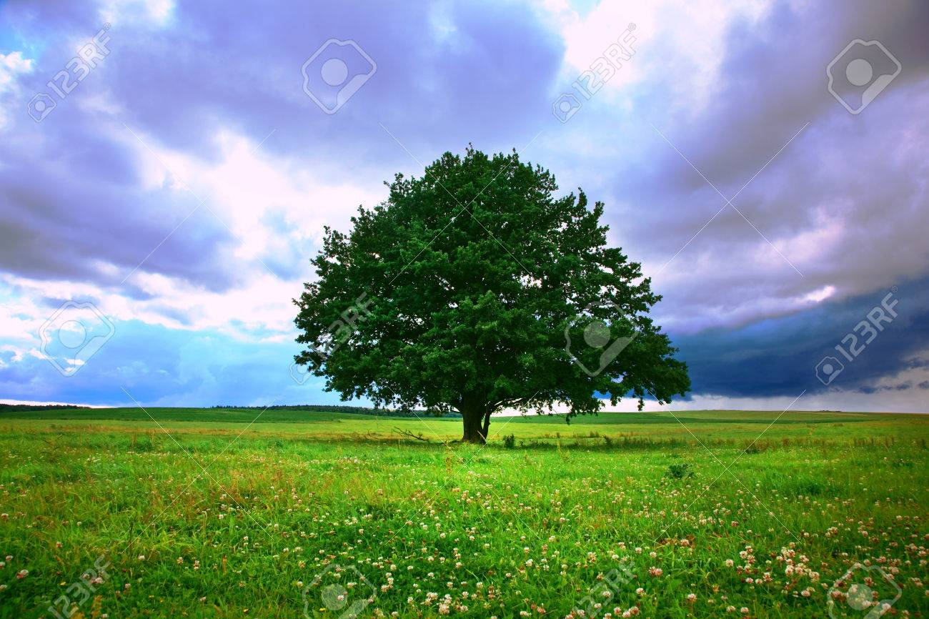 single tree in field under magical cloudy sky Stock Photo - 46592795
