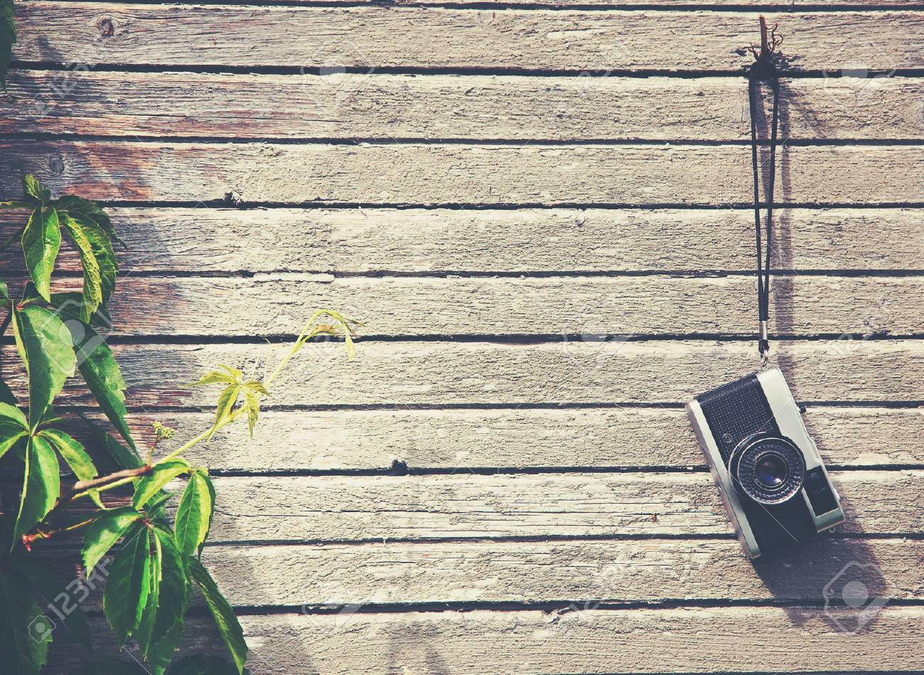 Retro vintage camera hanging on wooden natural boards with green plant. Copy space Stock Photo - 46651636