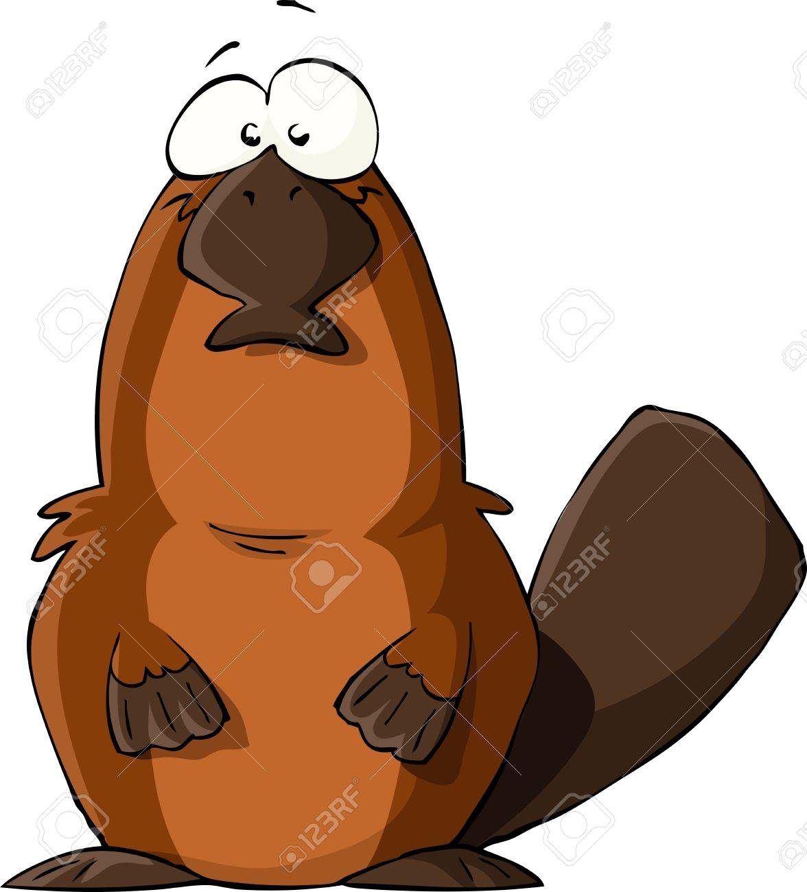 Platypus on a white background, vector illustration Stock Vector - 11182431