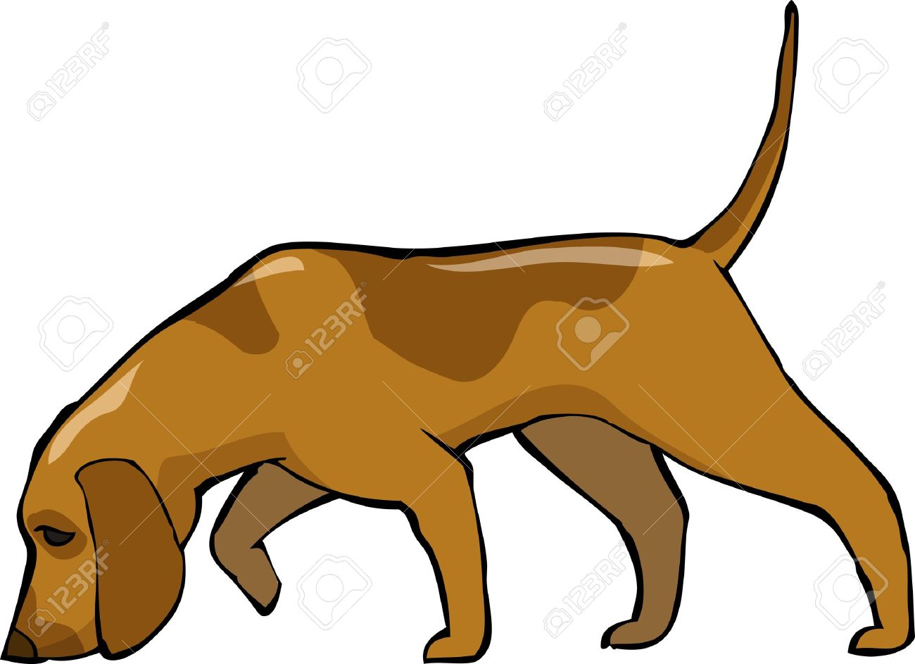 hunting dog stock photos u0026 pictures royalty free hunting dog
