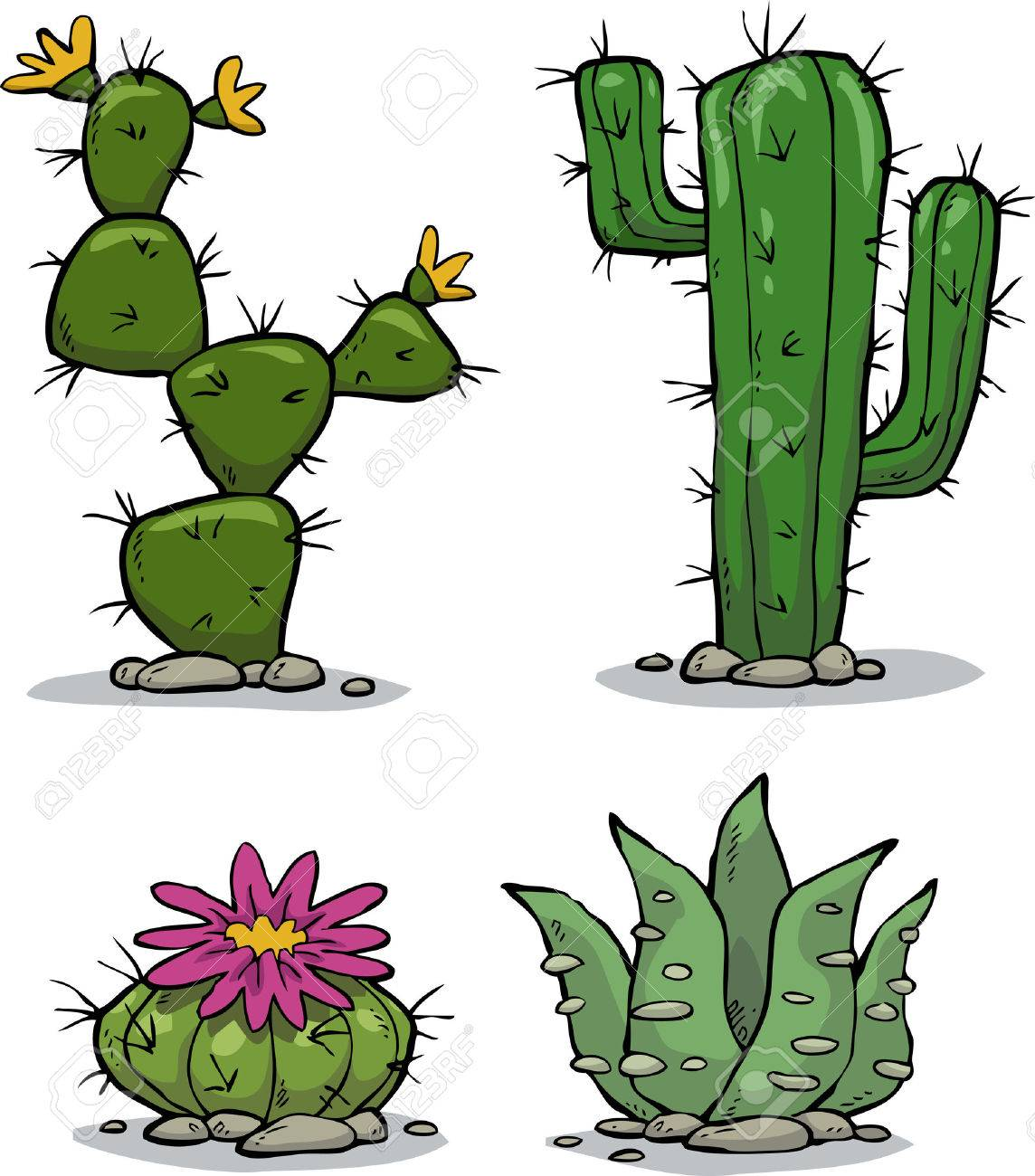 Cactus collection on a white background vector illustration - 47624941