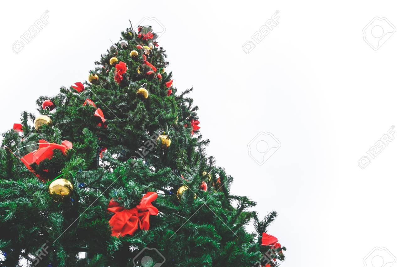 Large Outdoor Christmas Tree Against A White Sky View From Below Stock P O 69683873