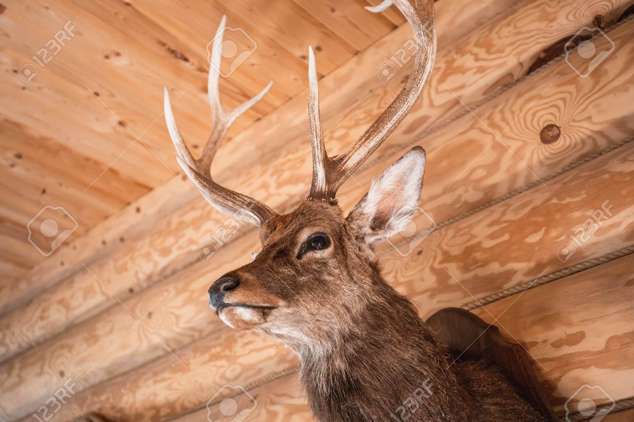 Brown Deer Head On Wooden Wall Background Animals Draft Or Trophy Stock Photo Picture And Royalty Free Image Image 115313433