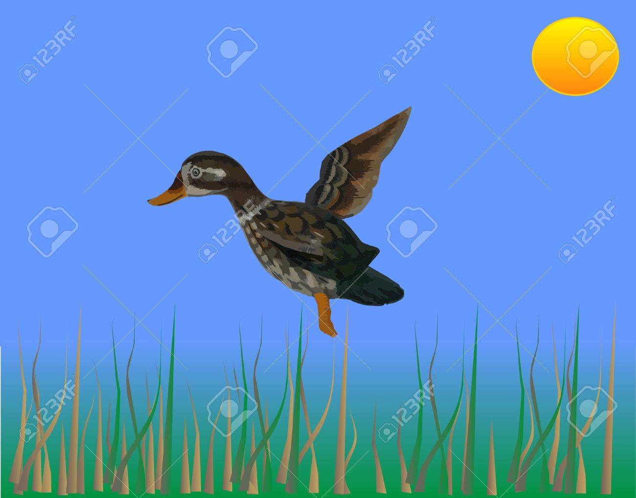 Ducking coming in for a landing over bull rushes illustration Stock Vector - 3936168