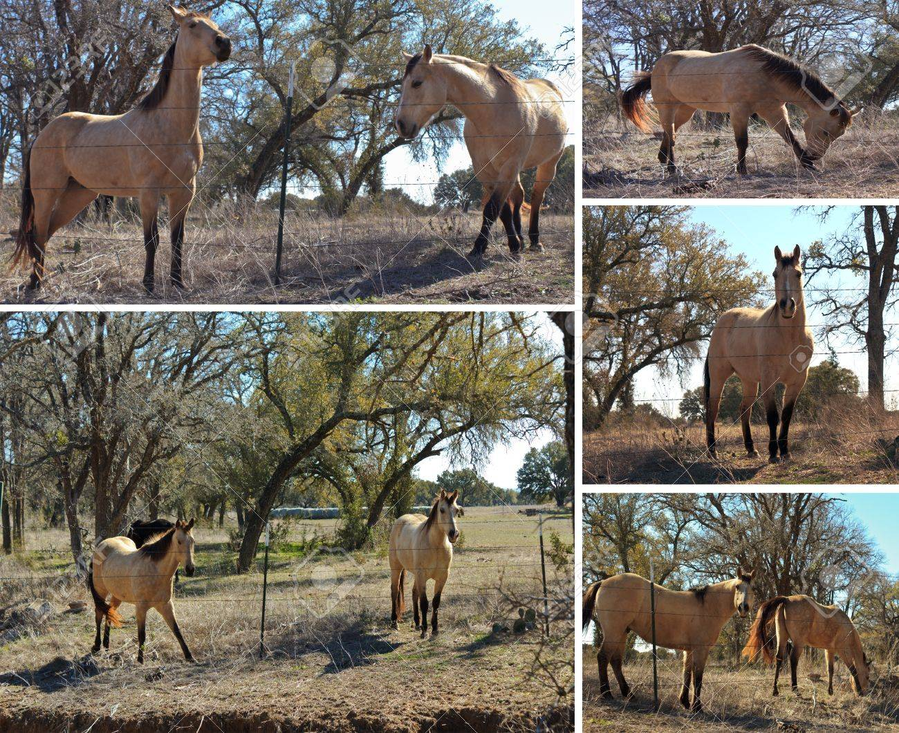 Horse Collage Of Horses In A Field With White Border Stock Photo Picture And Royalty Free Image Image 11980977