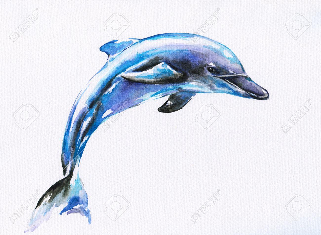 фото дельфина рисунки