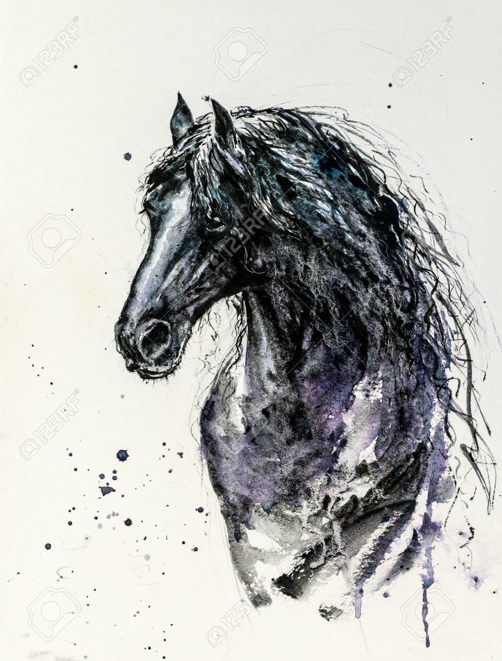 Decorative Portrait Of Beautiful Friesian Horse With Long Mane Stock Photo Picture And Royalty Free Image Image 119303805