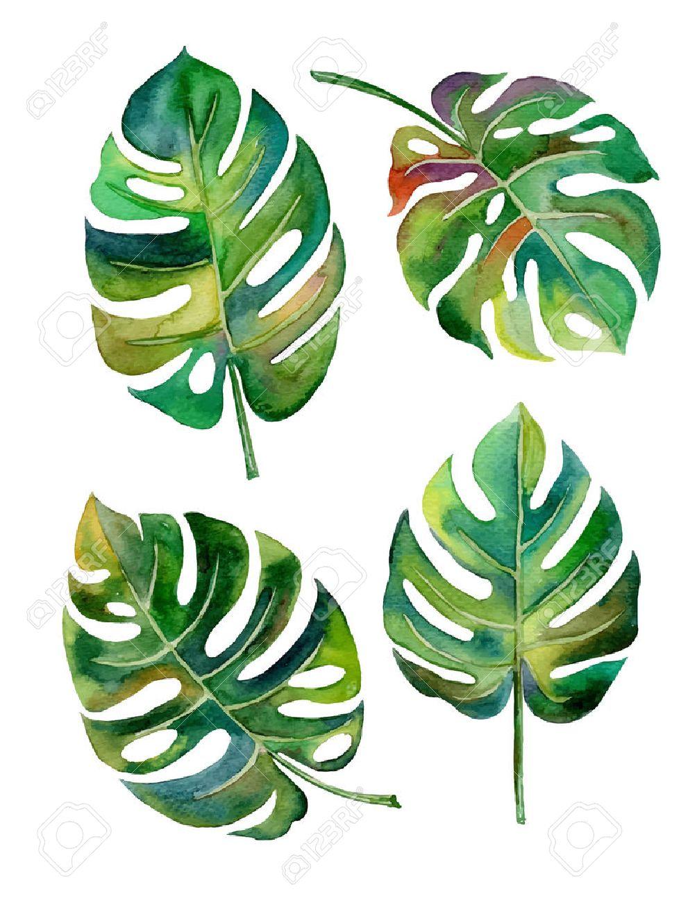hand draw Split leaf style design for the label, covertexture paper illustration EPS10 - 42835129