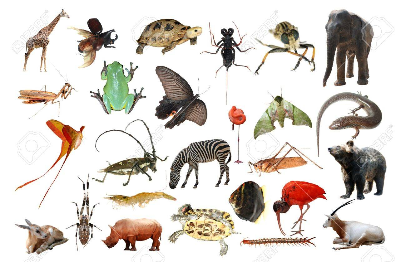 group of animals stock photos u0026 pictures royalty free group of