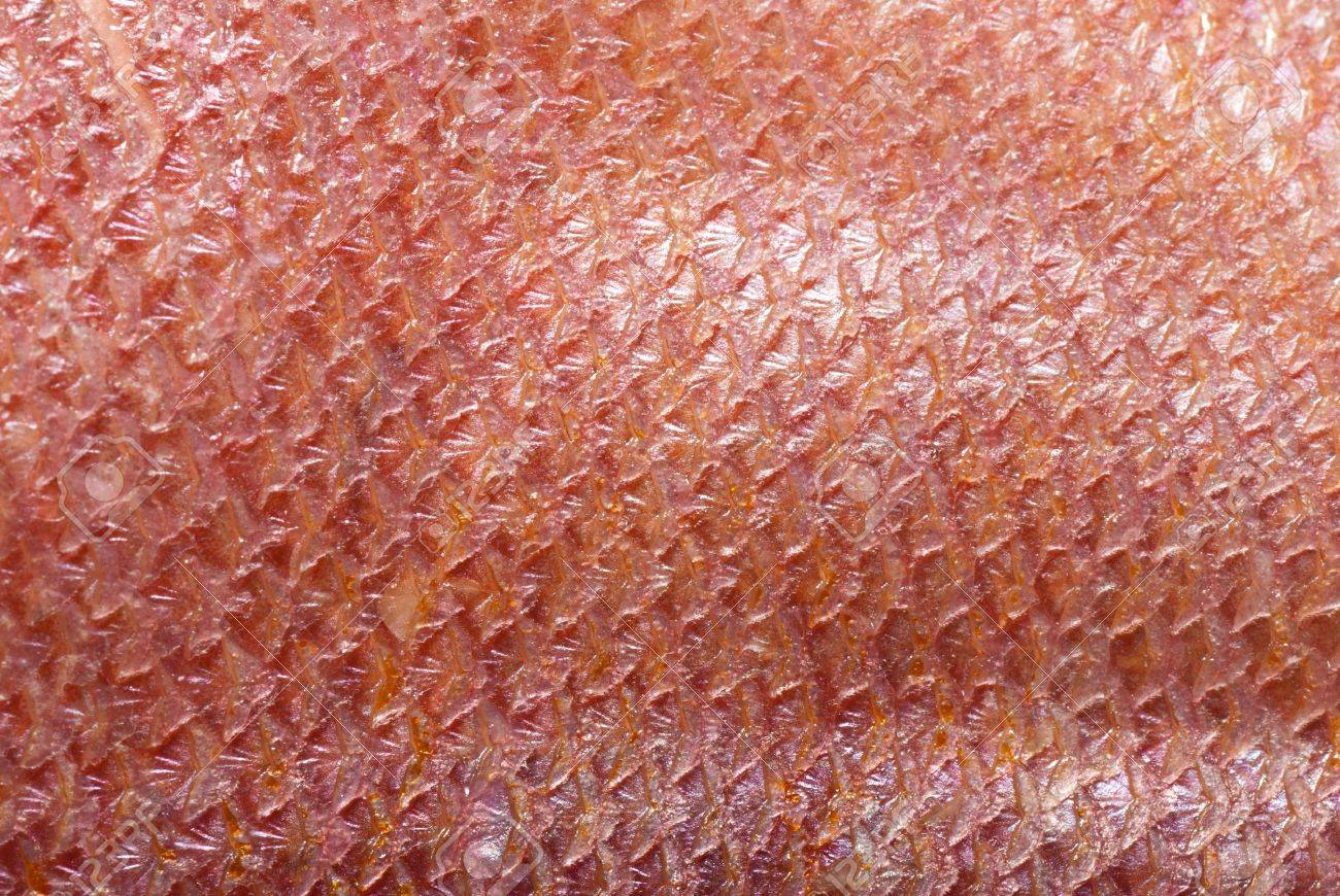 fish scale macro detail background - 8686343