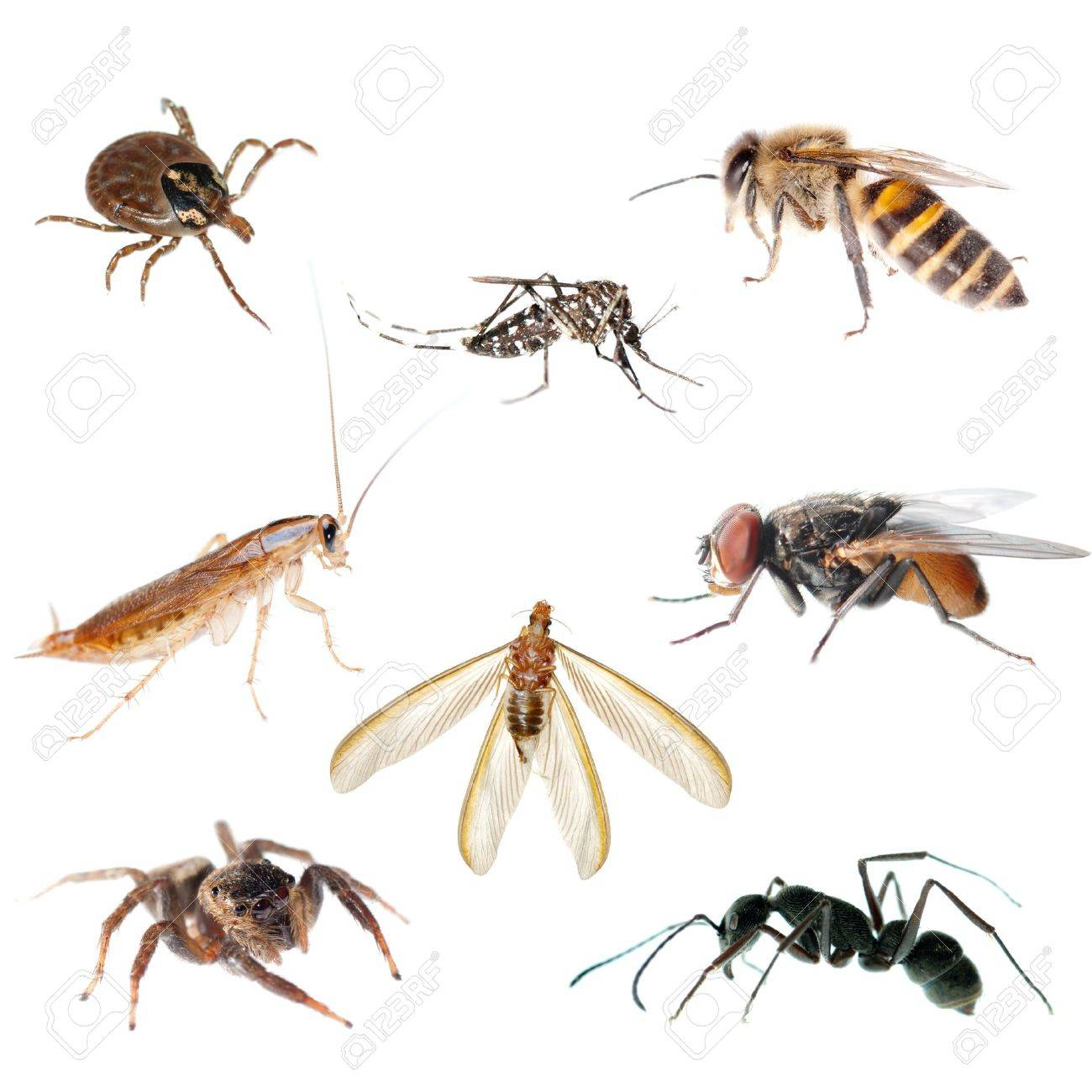 animal insect bug set collection Stock Photo - 9457646