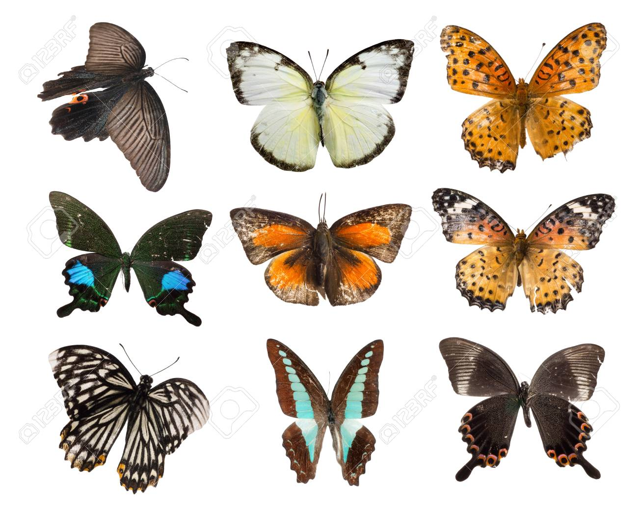 butterfly set collection isolated Stock Photo - 10073900