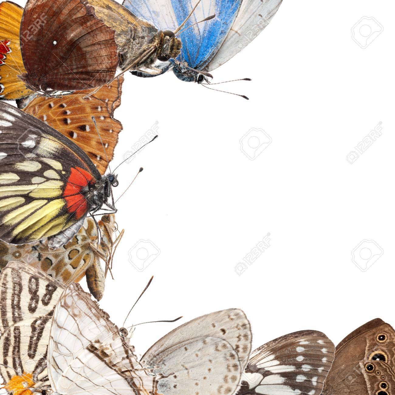 butterfly blank frame background isolated Stock Photo - 10073885