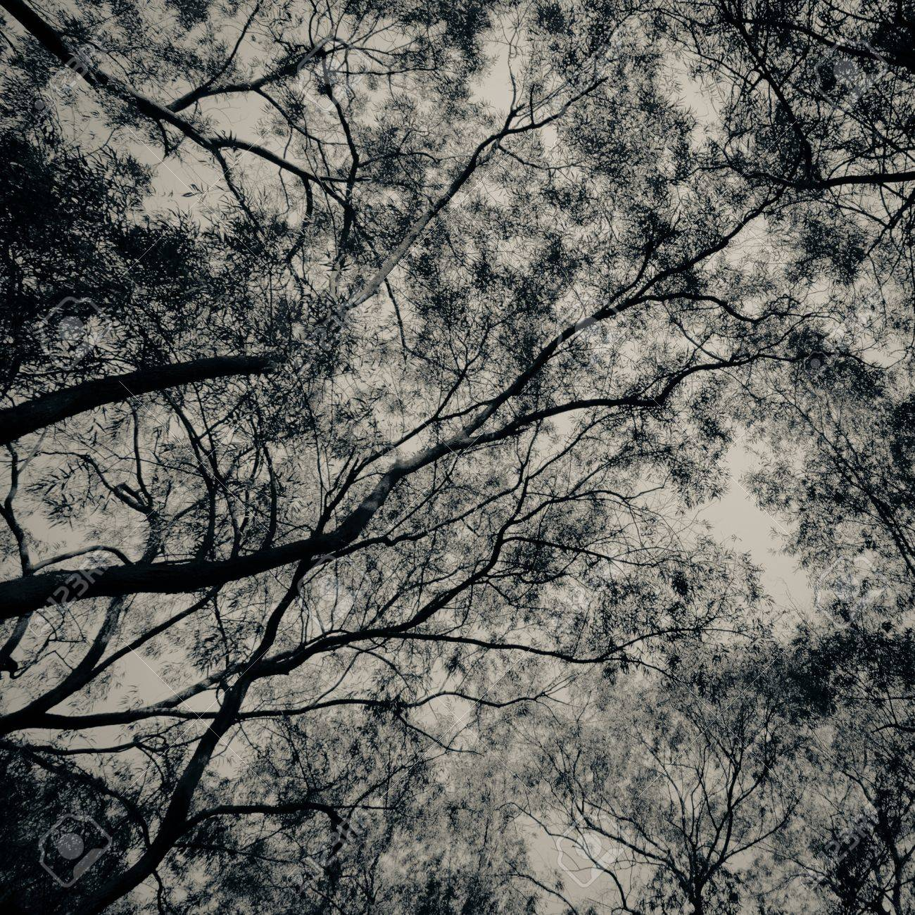 winter tree look up background Stock Photo - 11730435