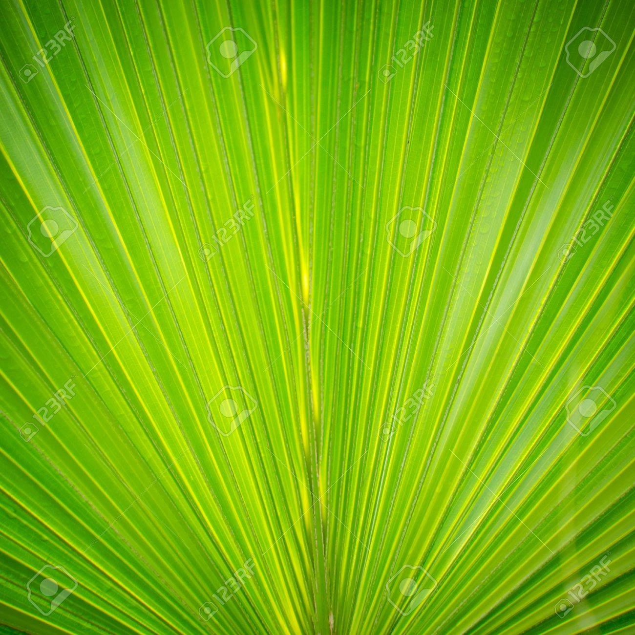 green palm tree leaf close up Stock Photo - 12396696