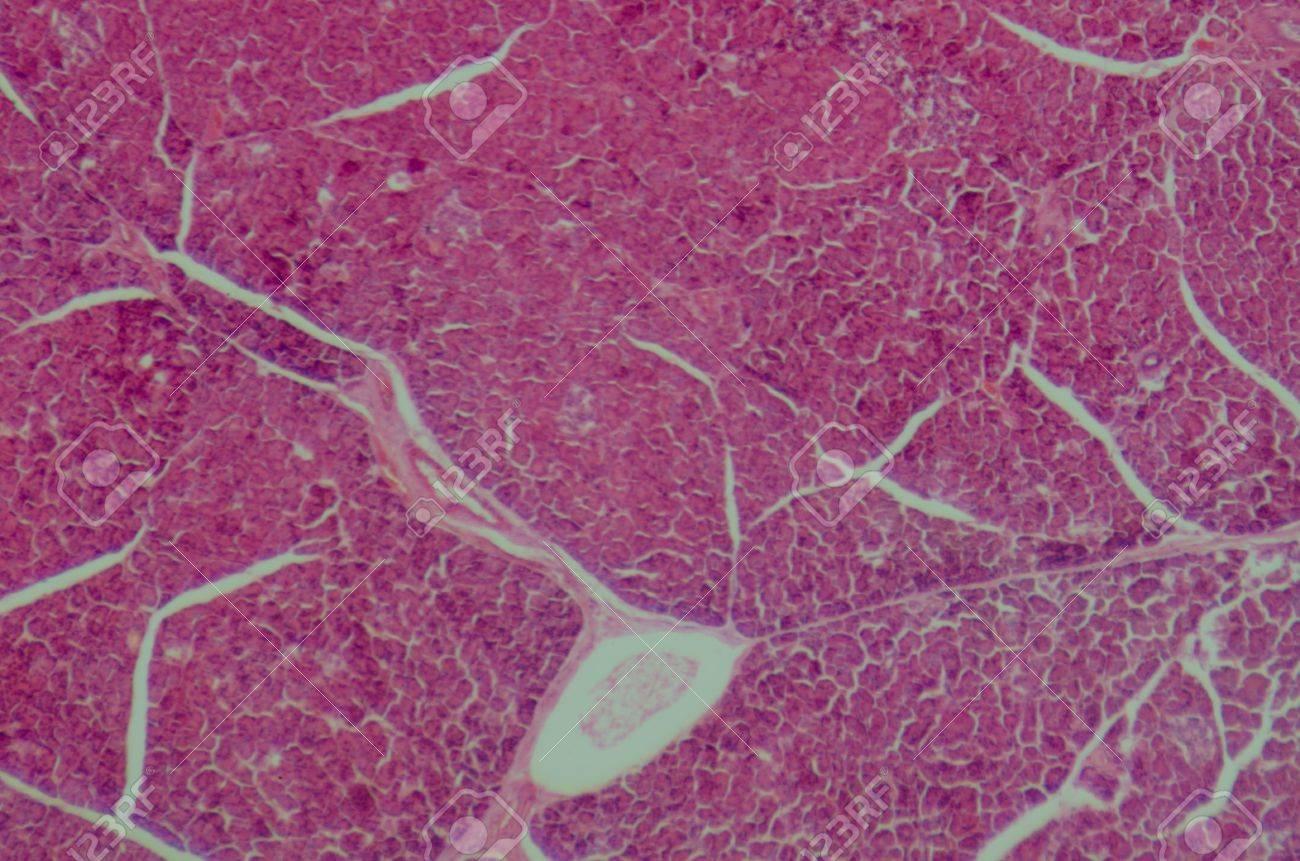 La Ciencia Médica Anthropotomy Fisiología Microscópica Sección De ...