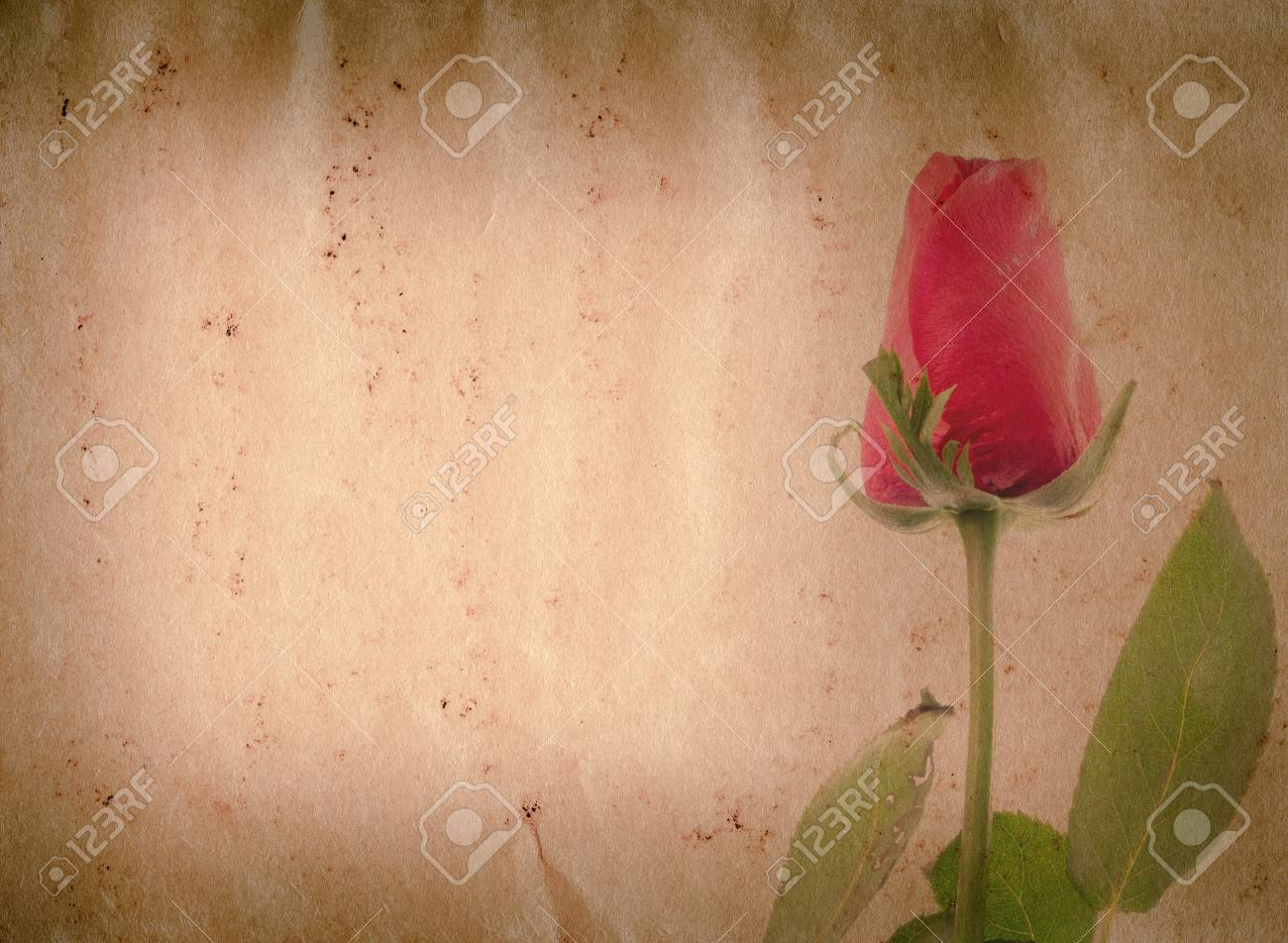 red rose flower old grunge paper texture background Stock Photo - 13463536