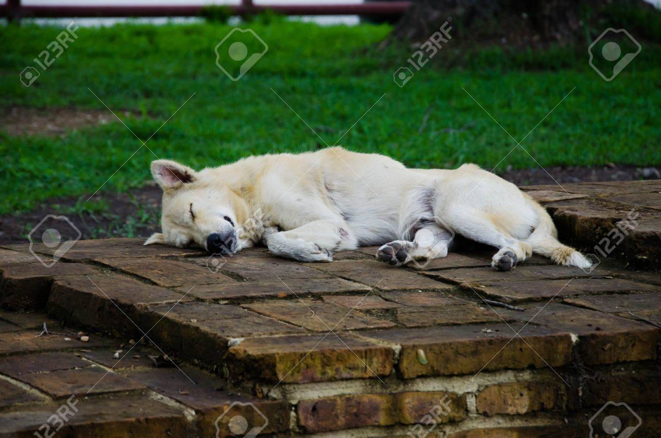 Sleeping Vagrant Dog in Thailand Stock Photo - 13288490