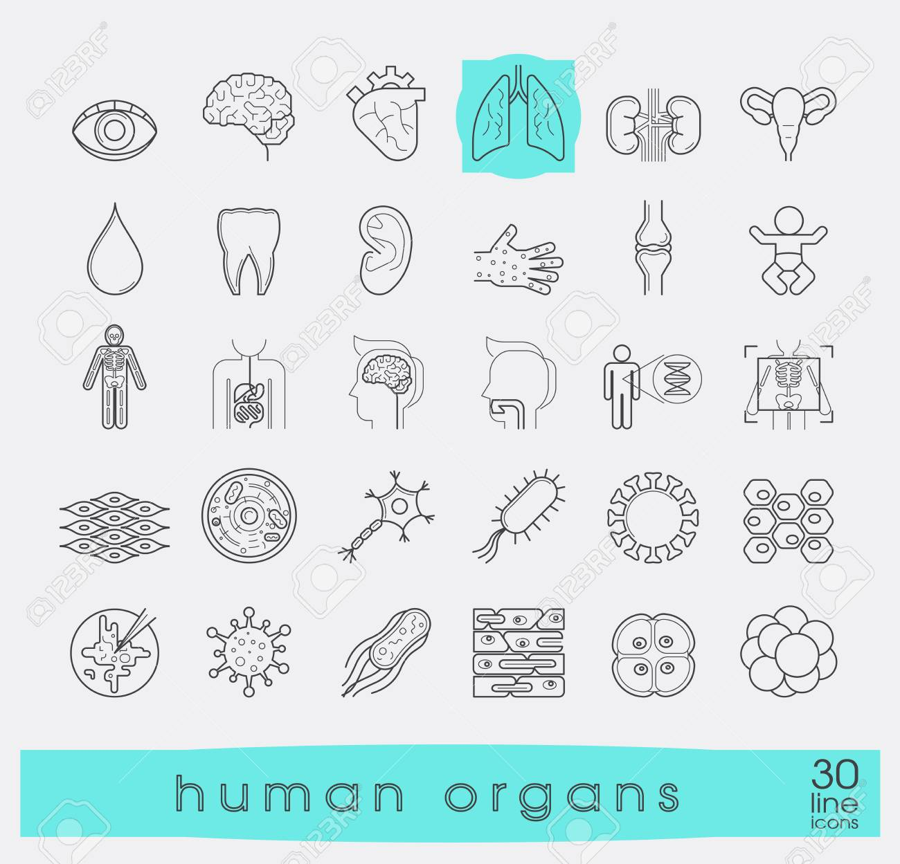 Icons presenting various organs of the human body. Set of premium quality line icons. Collection of anatomy icons. Medical and science. Vector illustration. Stock Vector - 63913909