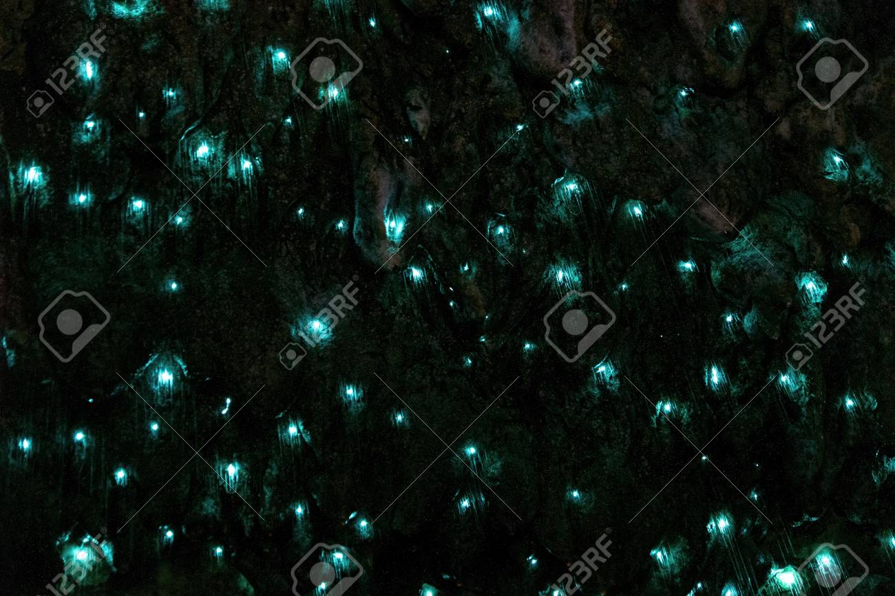 Amazing New Zealand Tourist attraction glowworm luminous worms in caves. High ISO Photo.. - 120133010