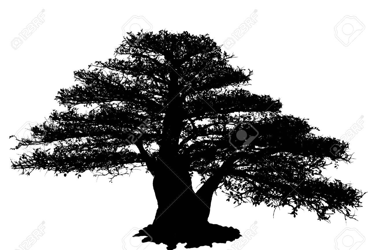 Bonsai Tree Isolated on white background - 138347555