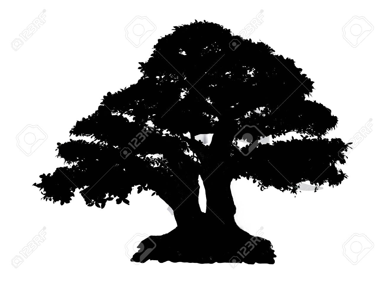 Black Silhouette Tree Isolated on white background - 138348290