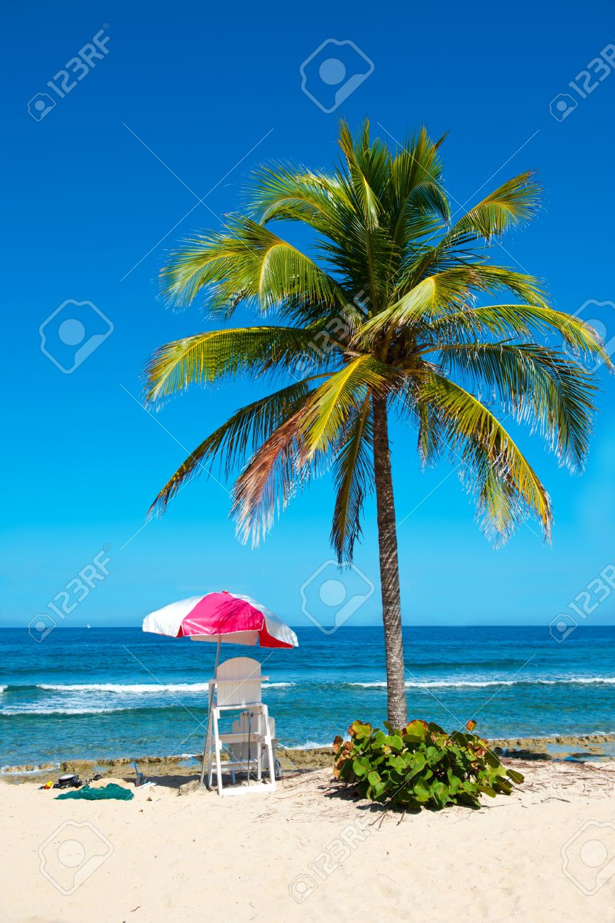 Exotic beach with lonely palm  and lifeguard station Stock Photo - 12185369