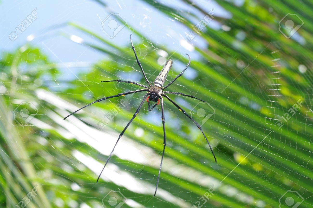 Big spider on its web Stock Photo - 18197972