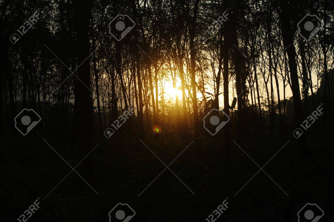 lights of sunset passing trought the forest Stock Photo - 18516371