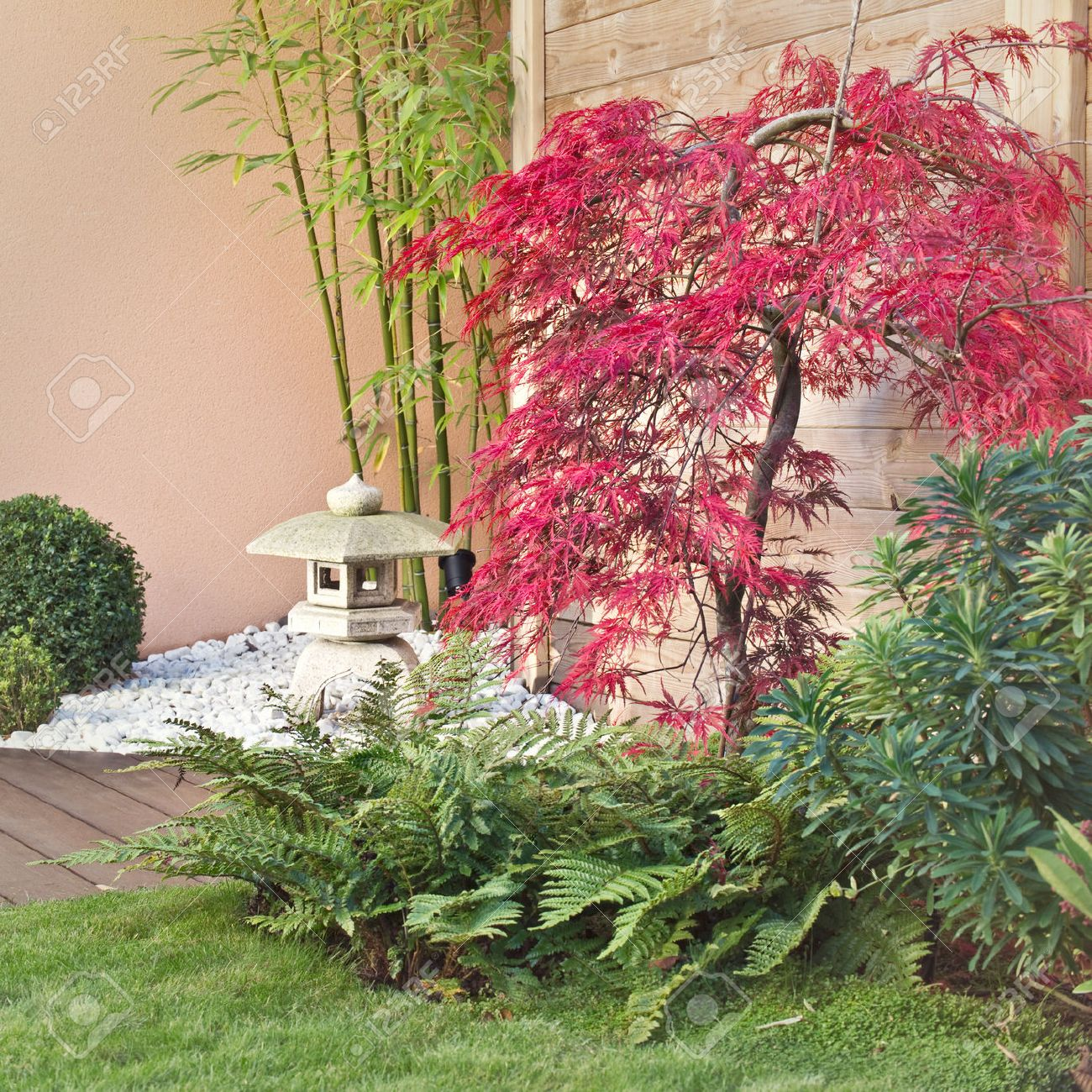 Red Japanese Maple Tree In A Zen Garden Stock Photo Picture And